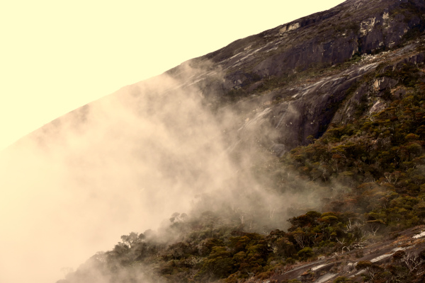 Evening mist at 2500 meters, Mount Kinabalu.
