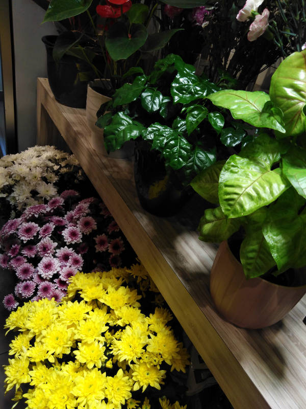 The various types of flowers and plants that were on display in the florist shop.