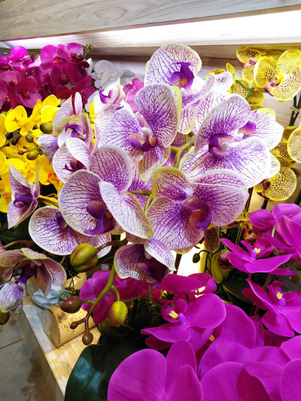 Phalaenopsis orchids: the orchids I decided to use for my mother's bouquet.
