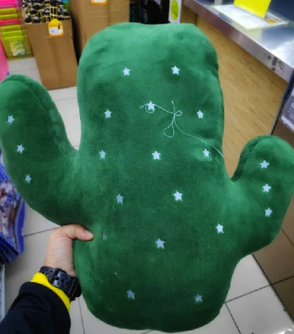 I'd rather buying a cute cactus toy found in DIY shop than renting.