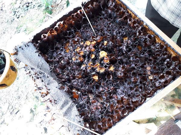propolis-hive