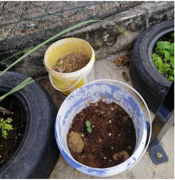 My mother uses old paint buckets and old tyres in her plantings.