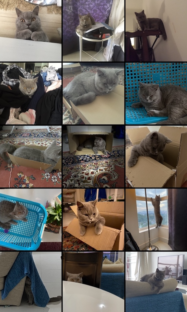 Cat Adoption: compilation photos of Atiqah's cat, Abu, in unexpected places such as laundry, boxes, table.