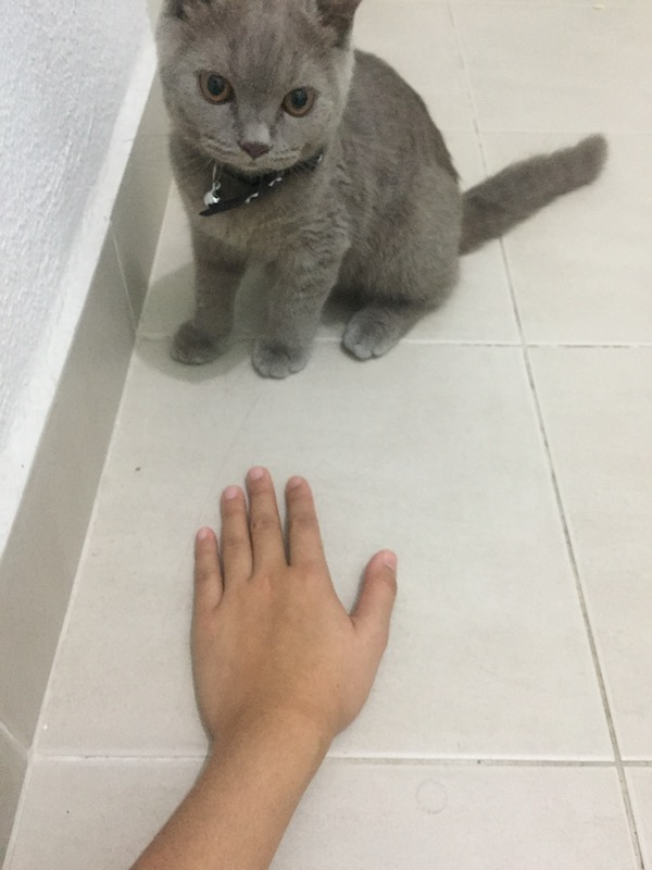 Cat Care 101: Atiqah trying to move closer to Abu in attempt to pet him