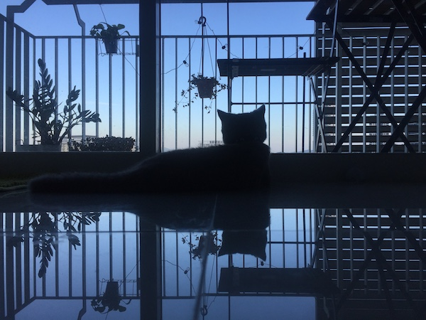 Atiqah's cat, Abu, sitting in front of the window, enjoying the sun rise view with his shadow reflecting on the floor tiles.