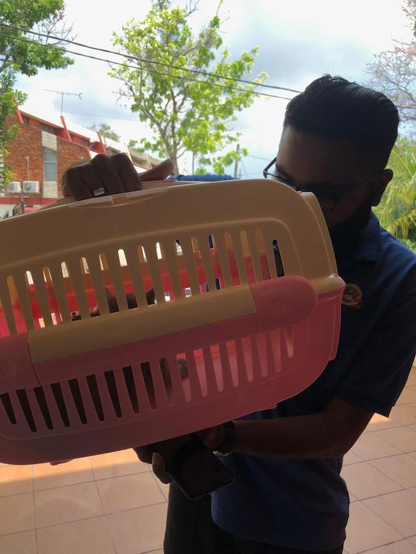 Cat Care 101: A driver from Pet Taxi Malaysia coming to pick up Abu from Penang to go to Kuala Lumpur