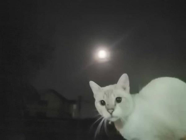 MCO  full moon