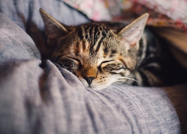 A picture of a cat sleeping so soundly on its sleeping couch.