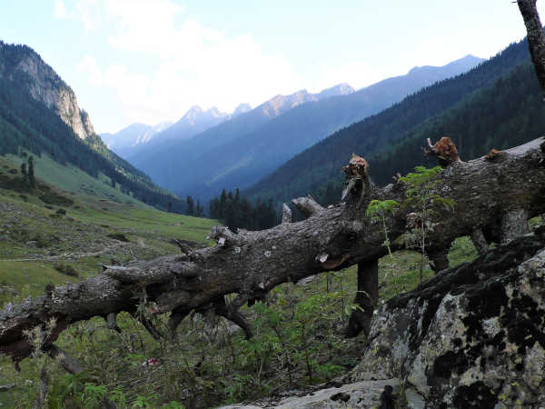 The afternoon trek to Lidderwat. An appreciation of nature's bounty in the mountains and valleys of Kashmir.