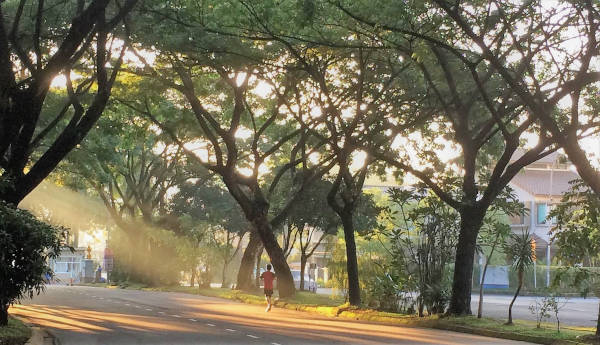 A solitary runner on the road in the early morning sun.