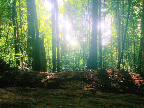 Sunlight dancing on the leaves in the forest of Gunung Ledang.