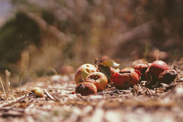 Decomposing waste can be reconstructed into an alternative food source