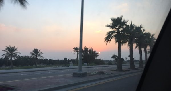 A photo of palm trees along the road of my street to my home in Saudi Arabia.