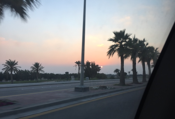 A photo of palm trees along the road with a sunset in the background in Saudi Arabia.