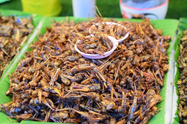 Fried insects are abundant in Asian  street markets