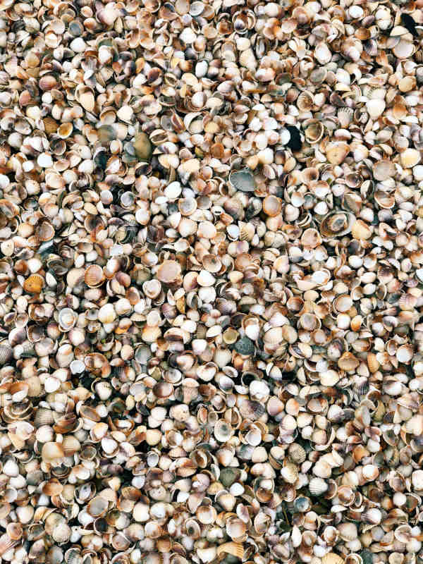 Discarded shells with great potential for good