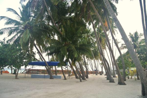 Coconut trees swaying in the breeze in Rehendi Inn, Maldives