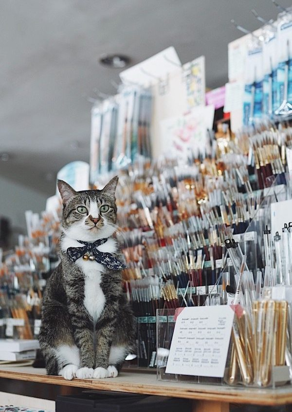A cat with a ribbon sitting next to a shelf of different paint brushes.