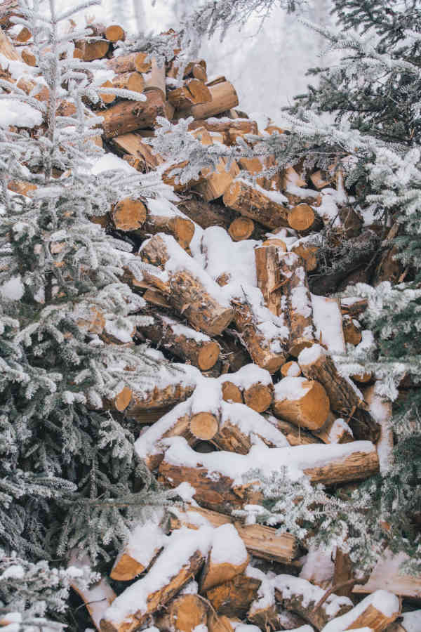 A pile of snow-covered chopped woods stacked on top of another surrounded by pine trees on either side of the picture.